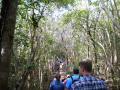 Hike Cameron Park 5