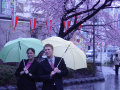Tokyo - Umbrellas