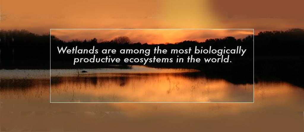 Wetlands Diversity 1