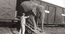 elephants unloading for circus