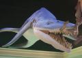 Pliosaur (hi-res)