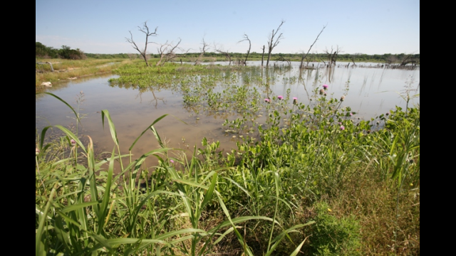 Lake Waco Wetlands