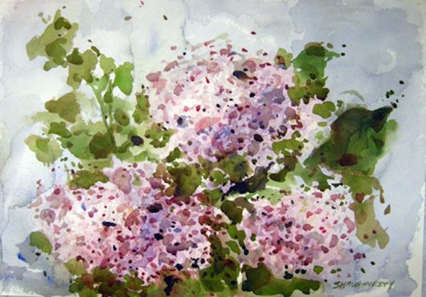 Marie Shaughnessy, Hydrangea.