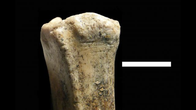 cut bone