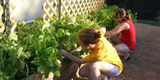 Photo of two students gardening