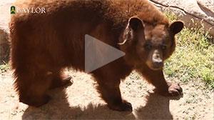 meet_bears
