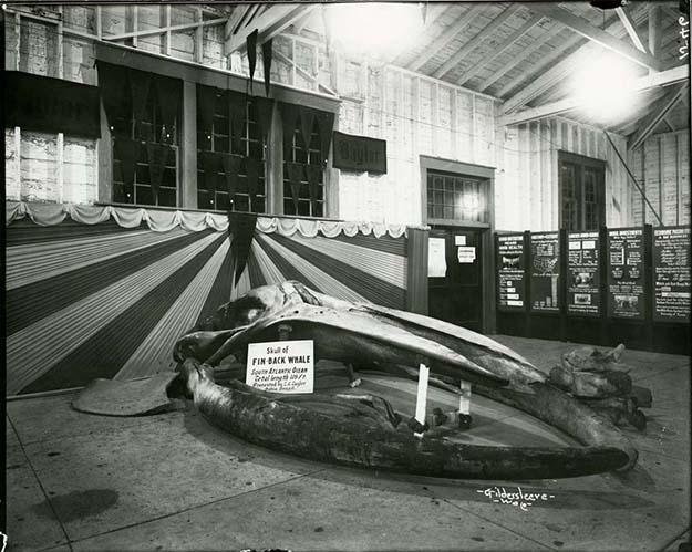 TCP exhibit whale