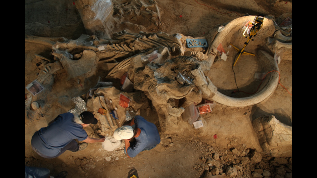 Mammoth excavation