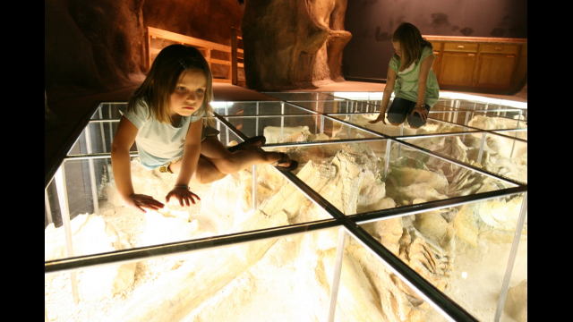 Mammoth Mayborn exhibit