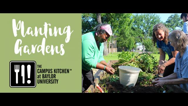 CK Planting Gardens graphic