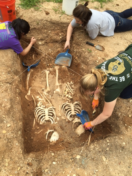 Students clear a dig site in a hole in eart, revealing a pair of skeletons