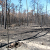 Baylor researcher contributes to important discovery about how carbon moves through soil after a fire