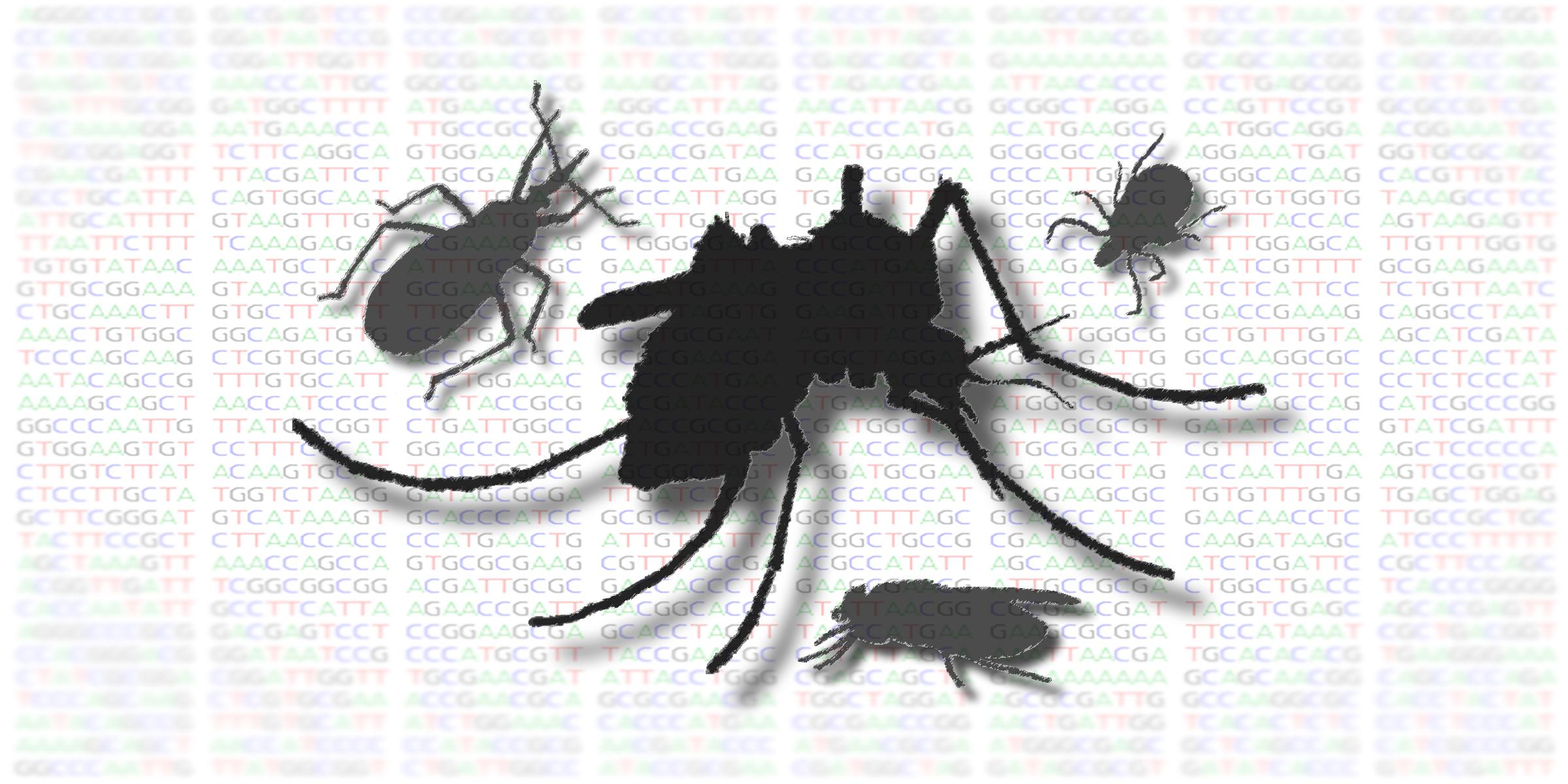Depiction of vectors - flies, mosquitoes