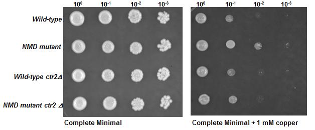Photo Representation of mRNA pathways