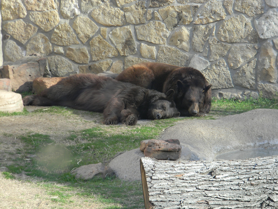 Photo of Joy and Lady, lounging in the Bear Habitat
