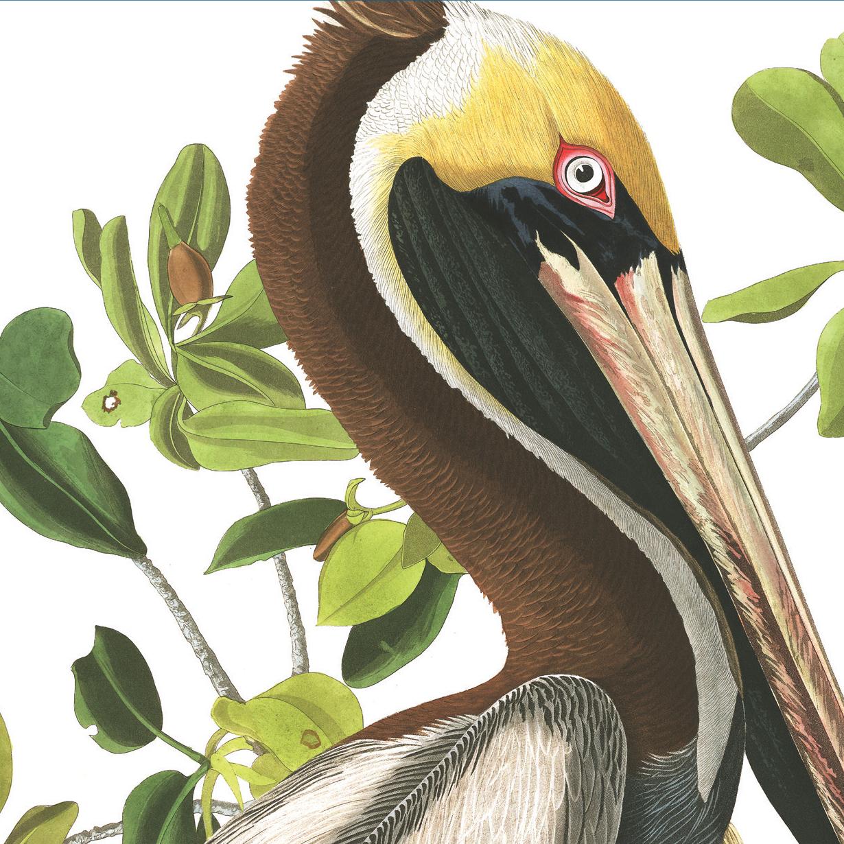 Audubon Detail