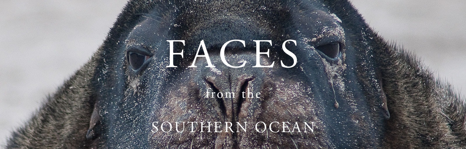 facesouthernocean-webslider-05082018