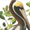 Martin Museum Will Celebrate Reopening and Present John James Audubon Exhibit