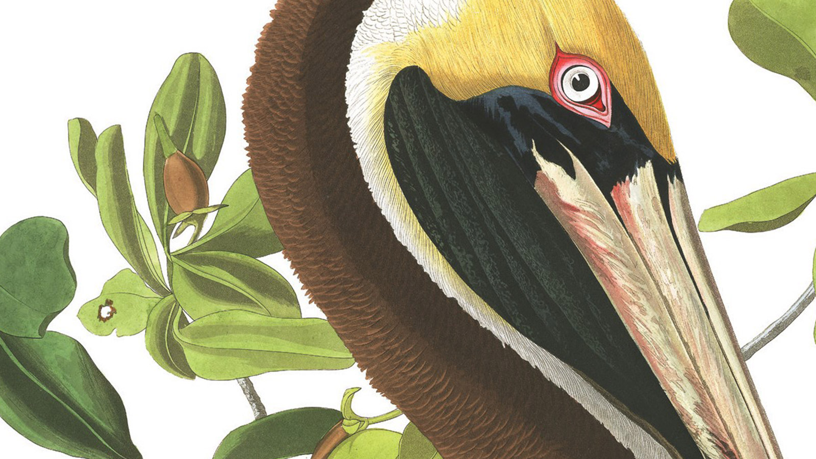Audubon Exhibit