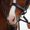 [Therapeutic Horseback Riding]