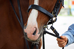 Photo of a horse in reins