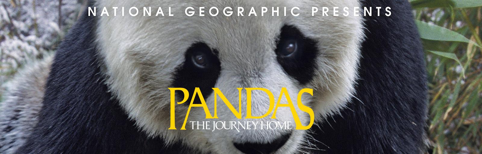 pandas-webslider