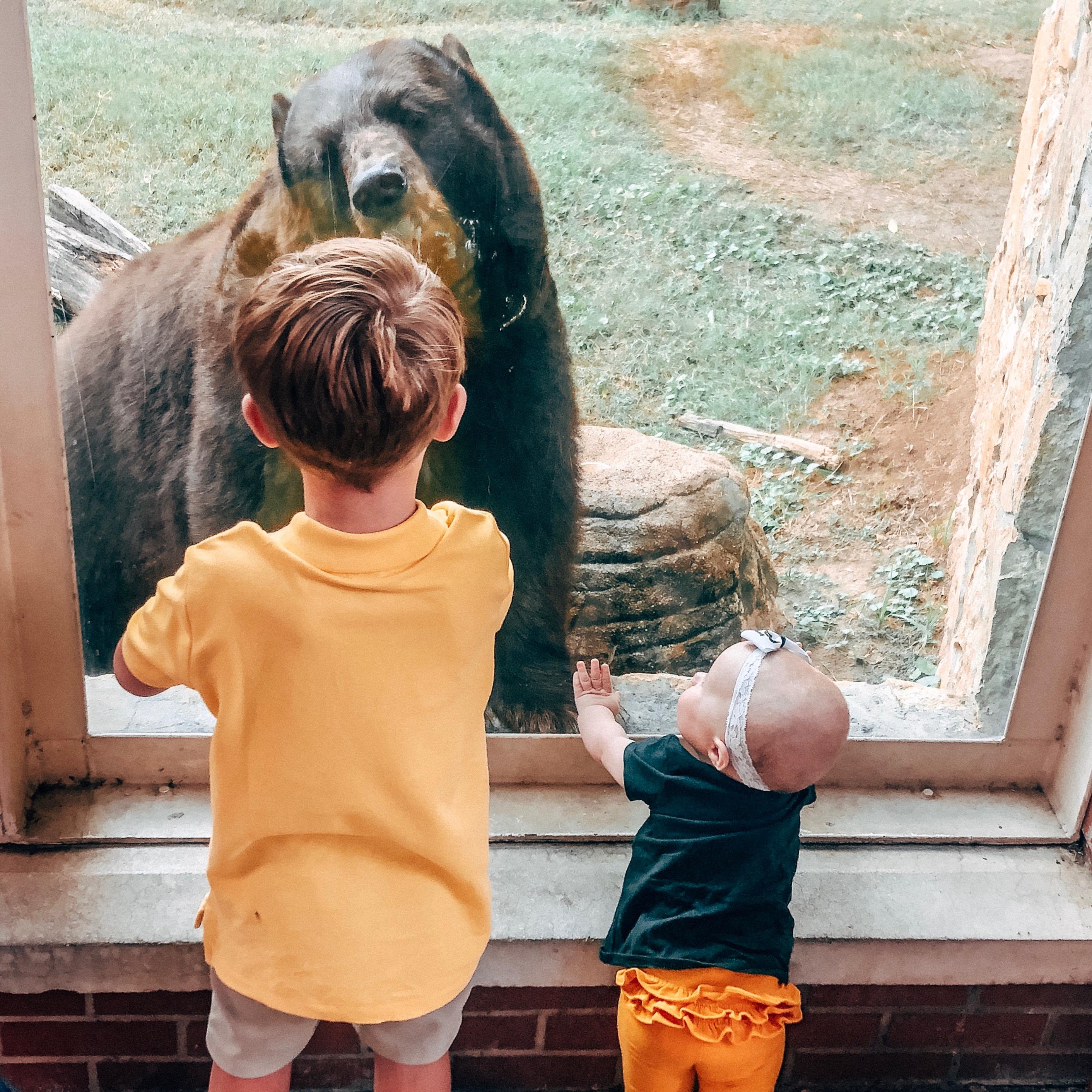 Photo of bears in their habitat