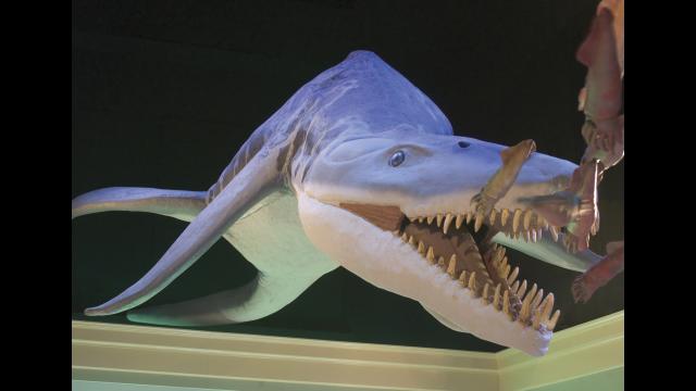 Mayborn pliosaur