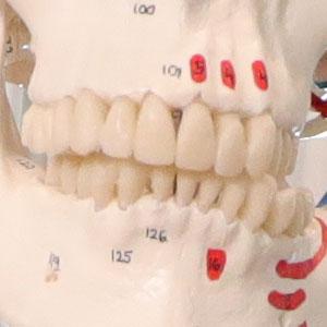 Pre-Dentistry