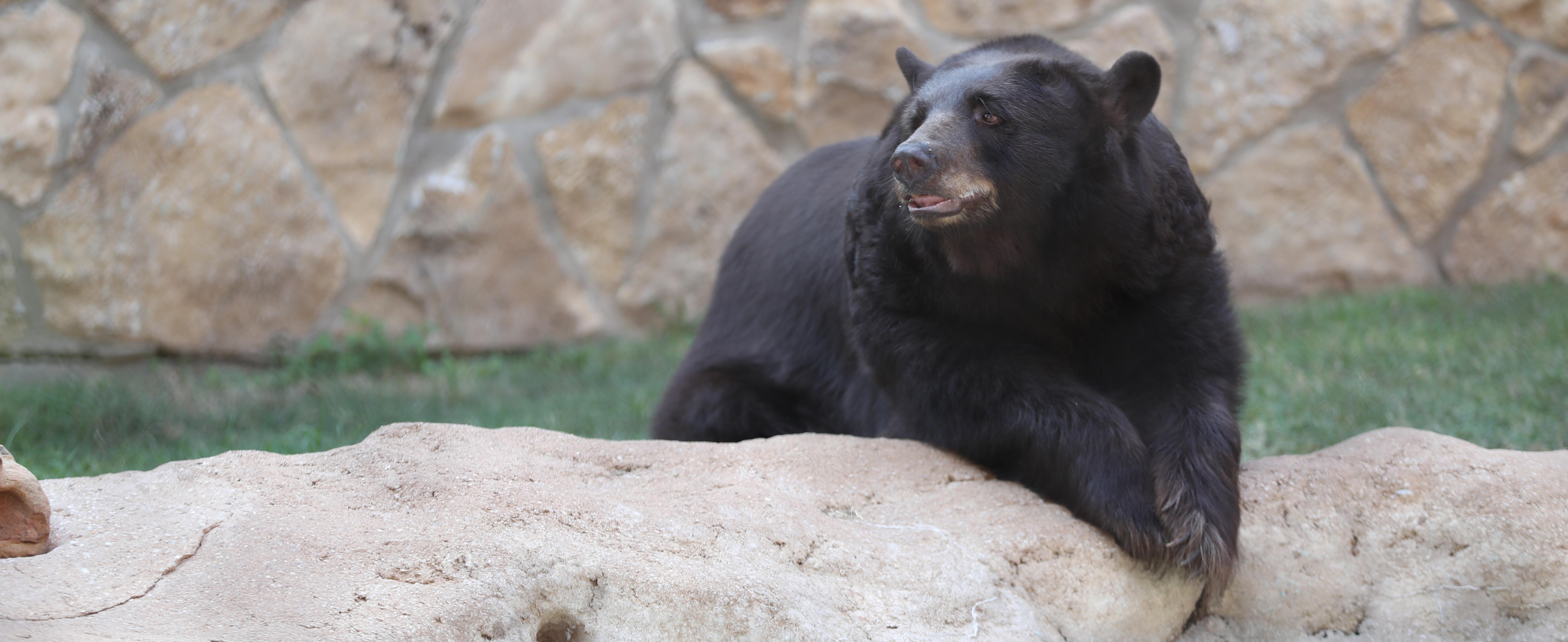 Header_Bears