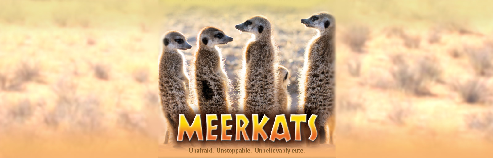 meerkats-webslider-01062019