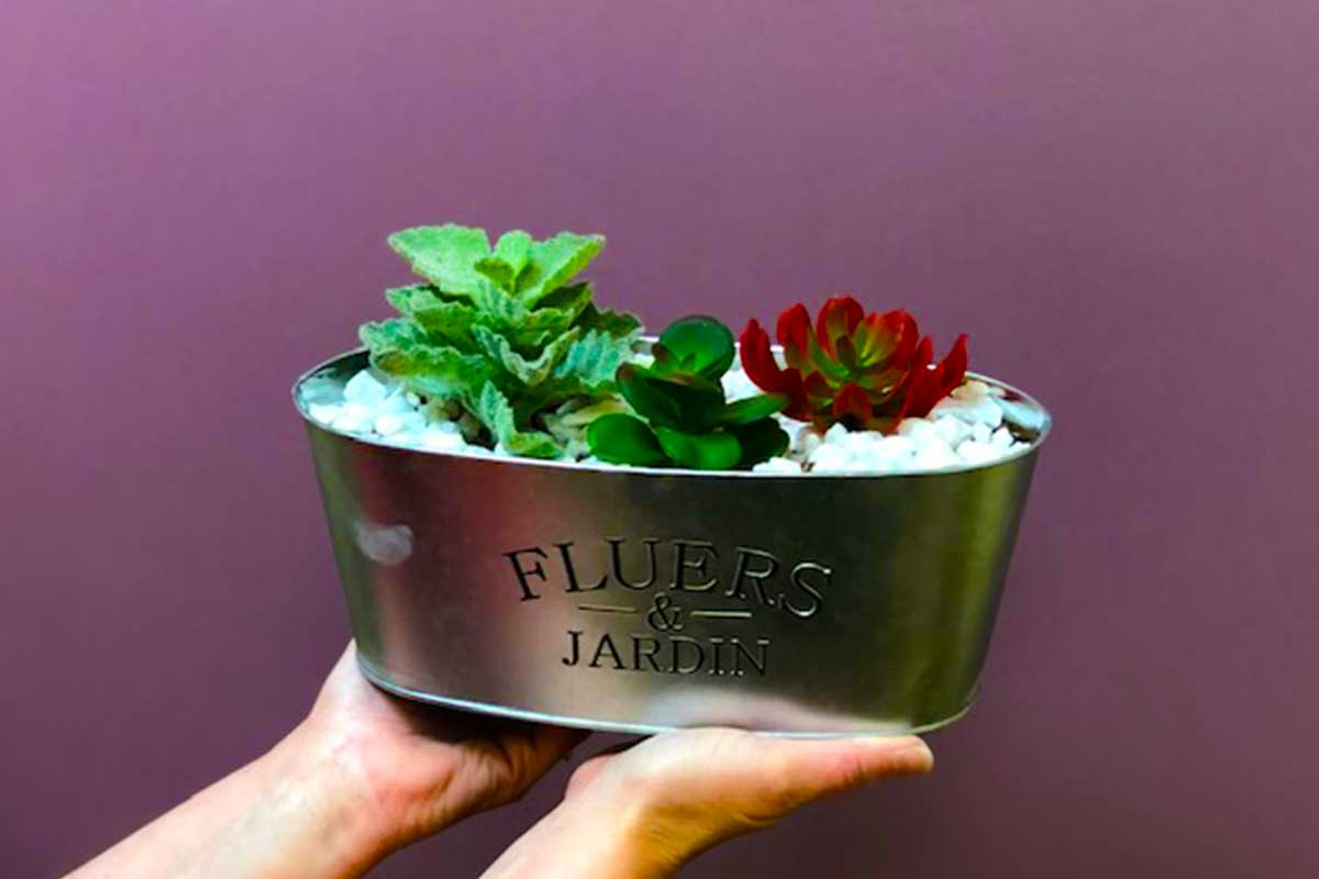 Mayborn at Home- Succulent Container Garden