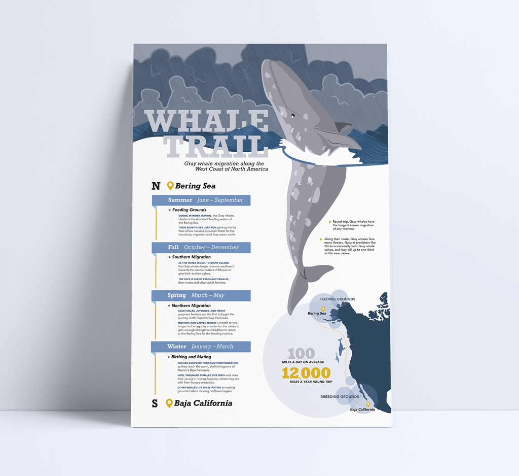 Whale Trail Infographic, Brenna Deever
