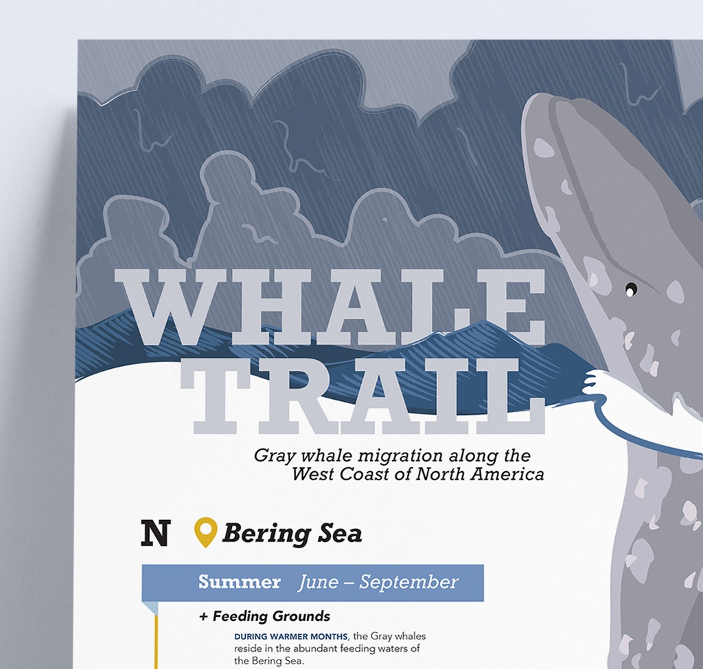Whale Trail Infographic (Detail 1), Brenna Deever