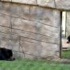 [bears]