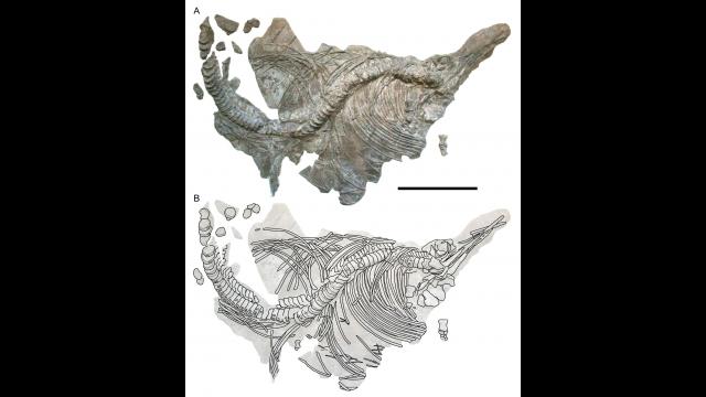 Full-Size Image: ichthy