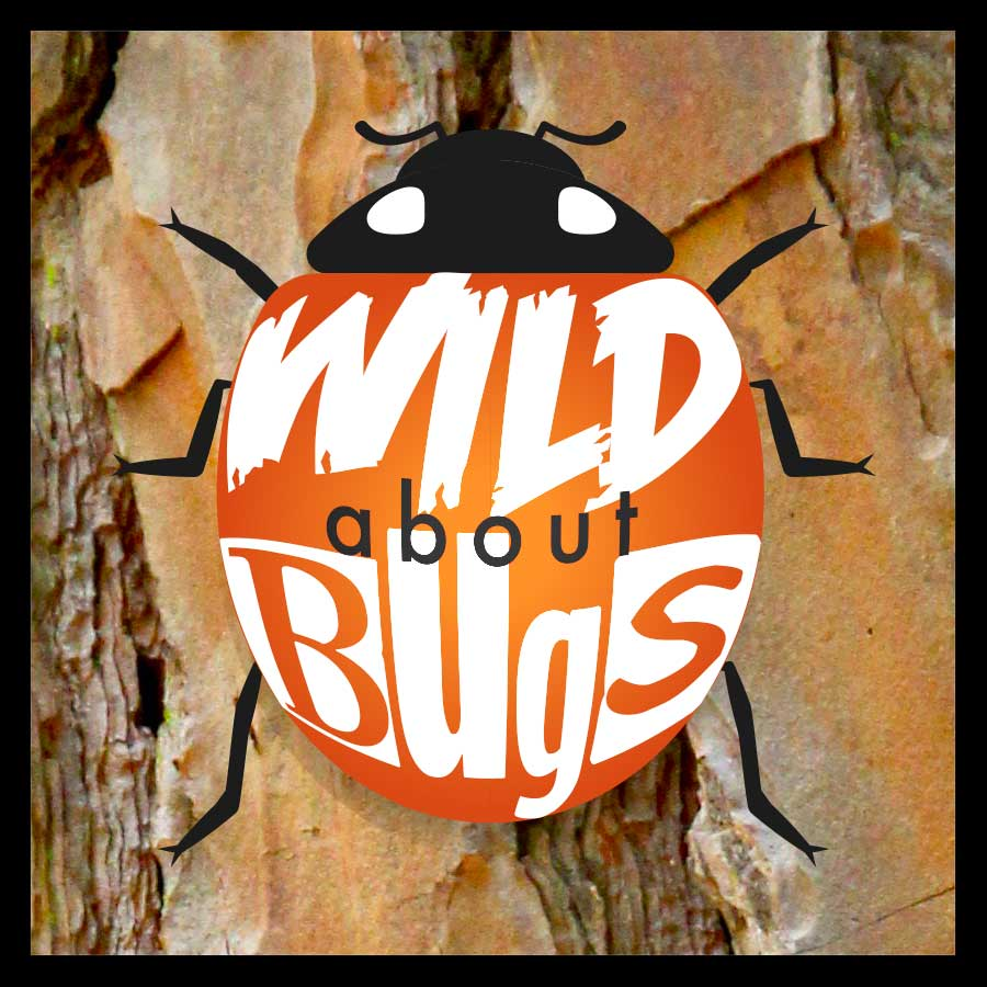 Wild About Bugs
