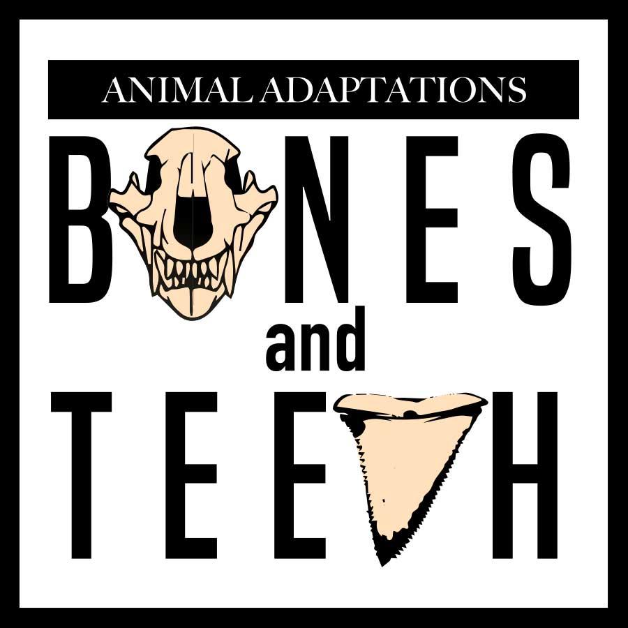 Animal Adaptations: Bones and Teeth