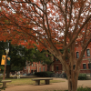 Baylor University Announces Funding of Health Science and Leadership Chair
