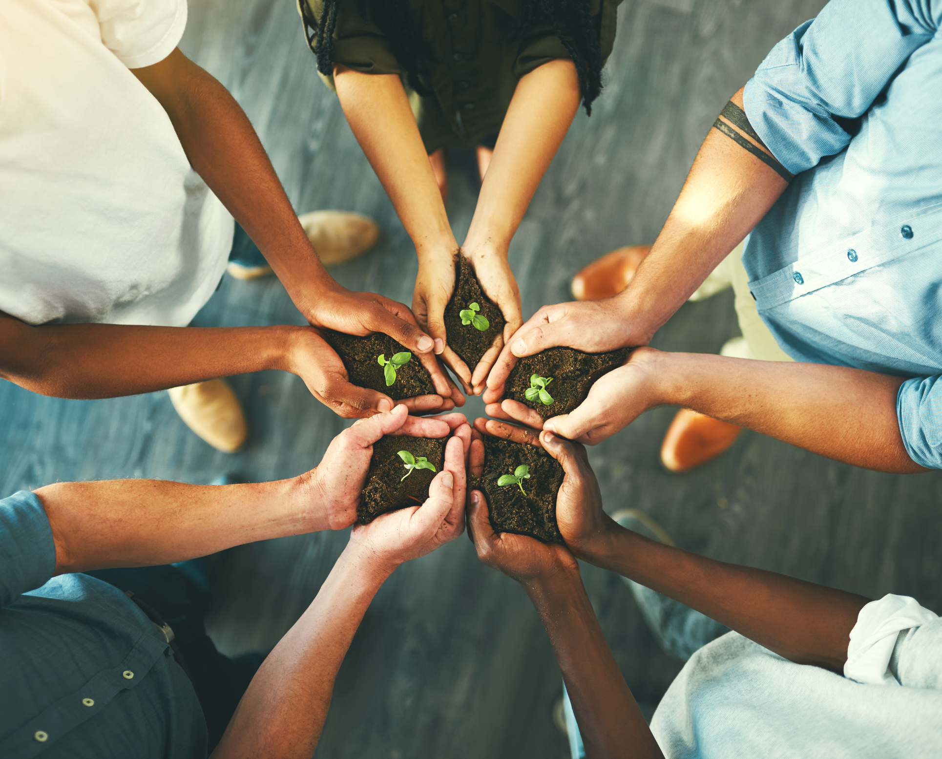 stock photo of hands in a circle holding small plant seedlings