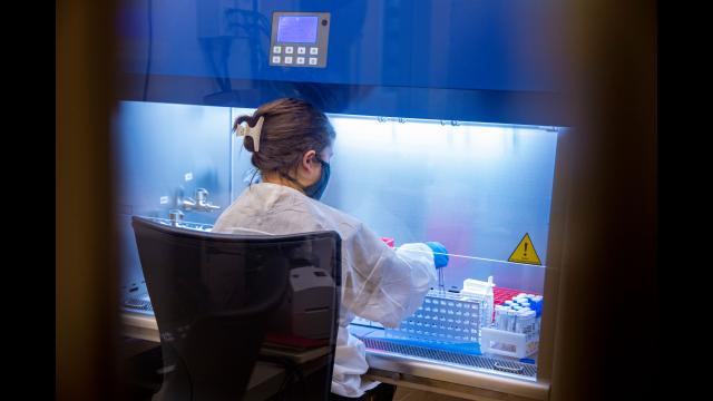 Full-Size Image: 9 - Photo Baylor MLD Lab staff processing tests