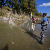 Baylor Research Earns Ecological Society of America Honors