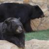 [Baylor Bears]