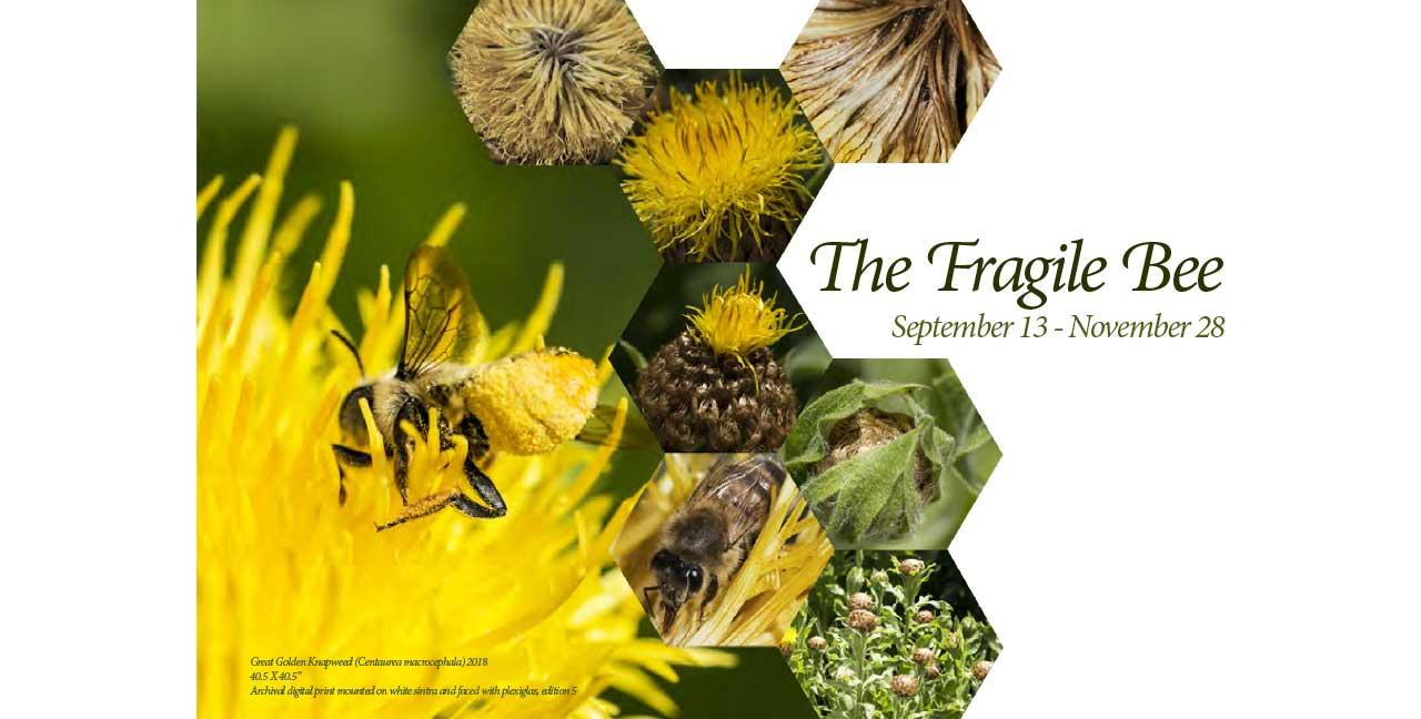 The Fragile Bee