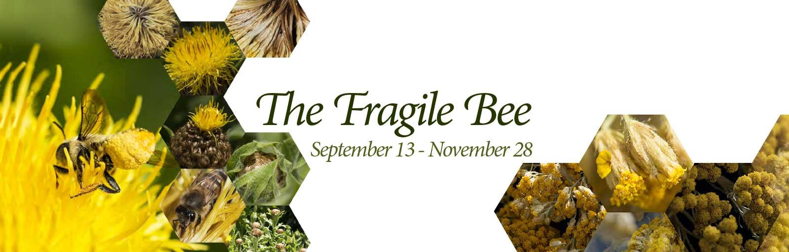 Fragile Bee- Webslider