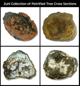 Zuhl Collection