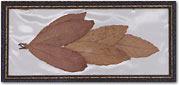 Realia-Laurel Leaves